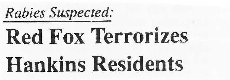 Rabies Suspected: Red Fox Terrorizes Hankins Residents